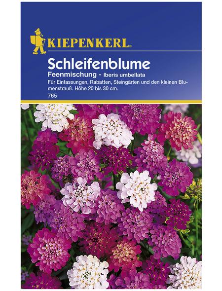 KIEPENKERL Kiepenkerl Saatgut, Schleifenblume, Iberis Schleifenblume, Mehrjährig