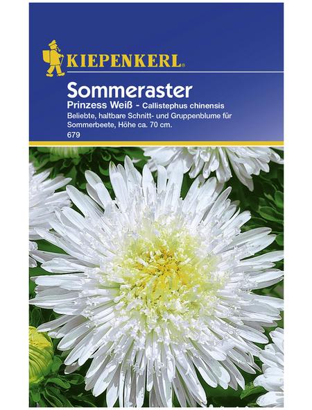 KIEPENKERL Kiepenkerl Saatgut, Sommeraster, Callistephus Prinzess Aster, Einjährig