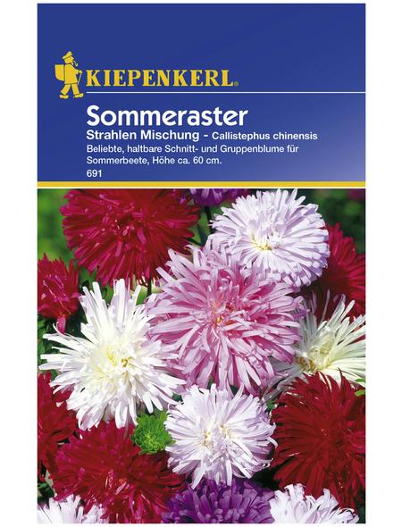 KIEPENKERL Kiepenkerl Saatgut, Sommeraster, Callistephus Strahlenaster, Einjährig