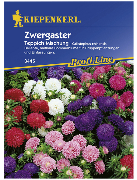 KIEPENKERL Kiepenkerl Saatgut, Sommeraster, Callistephus Zwergaster Teppich, Einjährig