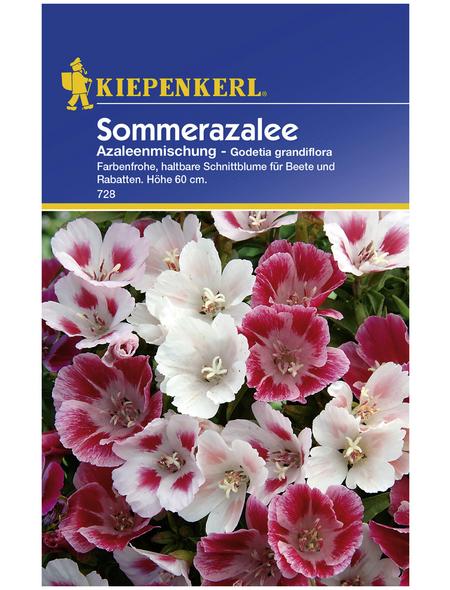 KIEPENKERL Kiepenkerl Saatgut, Sommerazalee, Godetia Sommerazalee, Einjährig
