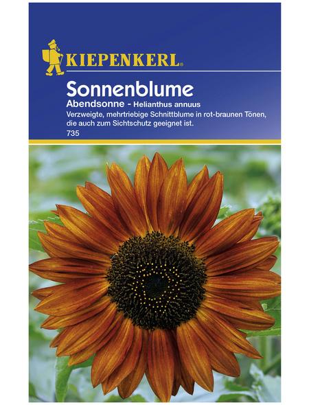 KIEPENKERL Kiepenkerl Saatgut, Sonnenblume, Helianthus annuus Abendsonne, Einjährig
