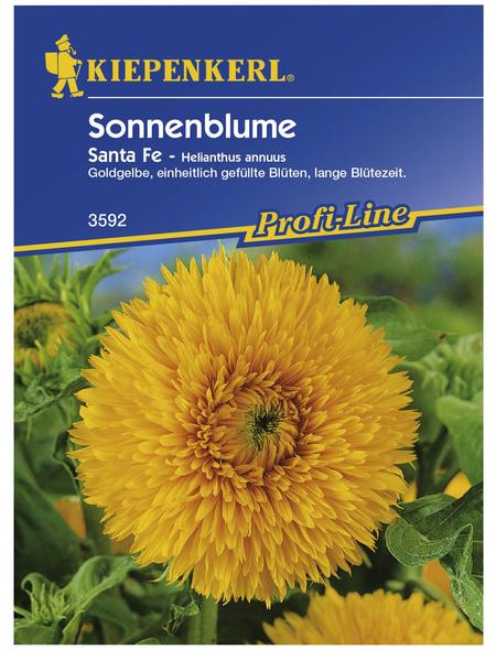 KIEPENKERL Kiepenkerl Saatgut, Sonnenblume, Helianthus annuus Santa Fe, Einjährig