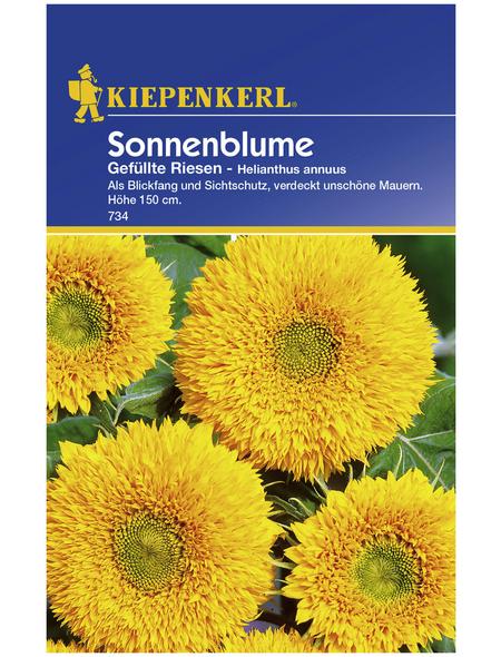 KIEPENKERL Kiepenkerl Saatgut, Sonnenblume, Helianthus Sonnenblume, Einjährig