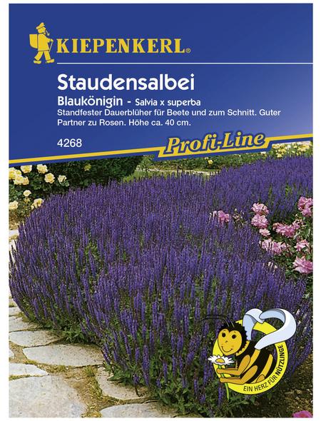 KIEPENKERL Kiepenkerl Saatgut, Staudensalbei, Salvia X Superba Blaukönigin, Mehrjährig