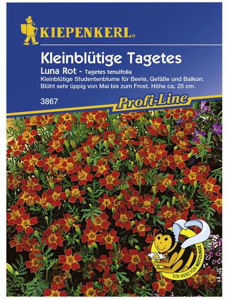 KIEPENKERL Kiepenkerl Saatgut, Studentenblume, Tagetes tenuifolia Luna, Einjährig