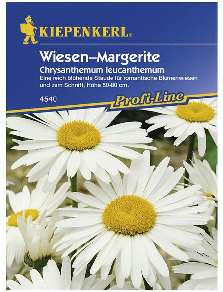 KIEPENKERL Kiepenkerl Saatgut, Wiesenmargerite, Chrysanthemum leucanth. Wiesen-Margerite, Mehrjährig