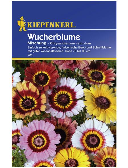 KIEPENKERL Kiepenkerl Saatgut, Wucherblume, Chrysanthemum Carinatum, Einjährig