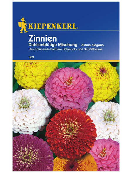 KIEPENKERL Kiepenkerl Saatgut, Zinnie, Zinnia Dahlienbl. Mix, Einjährig