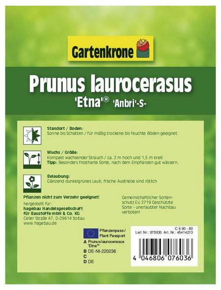 GARTENKRONE Kirschlorbeer, Prunus laurocerasus »Etna «, weiß, winterhart