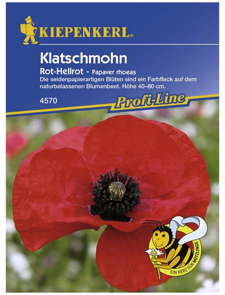 KIEPENKERL Klatschmohn, Papaver rhoeas, Samen, Blüte: rot