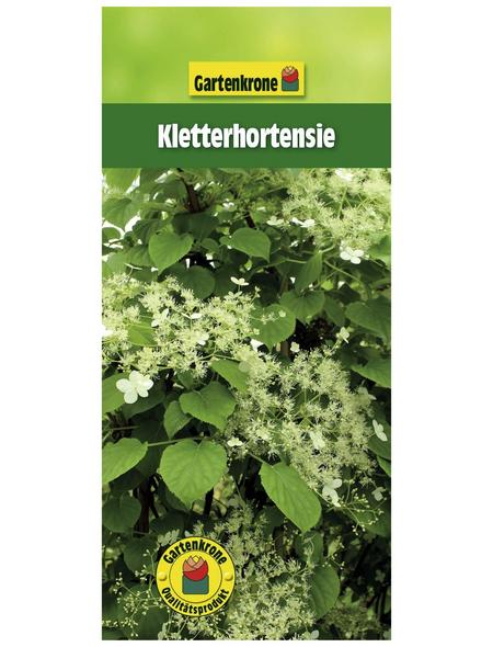 GARTENKRONE Kletterhortensie petiolaris Hydrangea