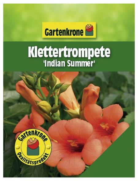 GARTENKRONE Klettertrompete, Campsis tagliabuana »Indian Summer«, Blüten: orange