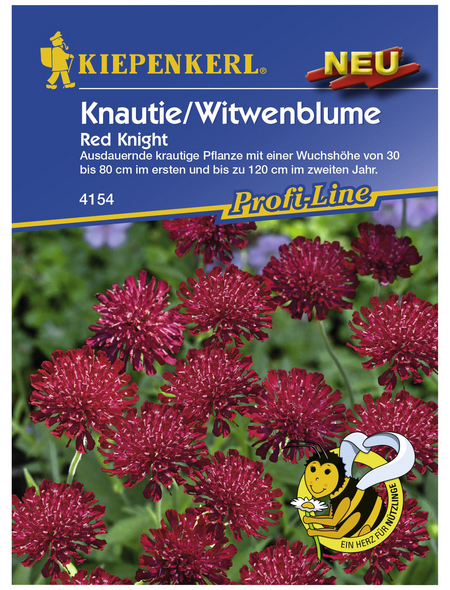 KIEPENKERL Knautie / Witwenblume, Knautia macedonica, Samen, Blüte: rot