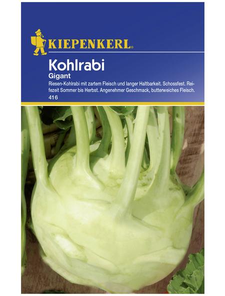 KIEPENKERL Kohlrabi oleracea var. gongylodes Brassica