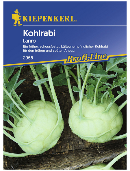 KIEPENKERL Kohlrabi oleracea var. sabellica Brassica
