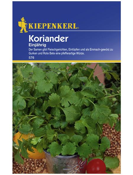 KIEPENKERL Koriander sativum Coriandrum