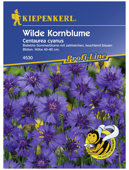 KIEPENKERL Kornblume, Centaurea cyanus, Samen, Blüte: blau