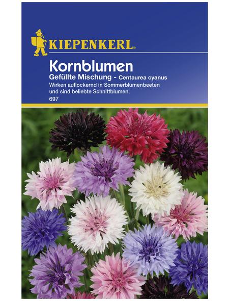 KIEPENKERL Kornblume, Centaurea cyanus, Samen, Blüte: mehrfarbig