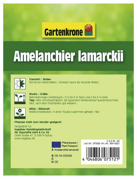 GARTENKRONE Kupferfelsenbirne, Amelanchier Lamarckii, Blüten: weiß, Früchte: schwarz, süß