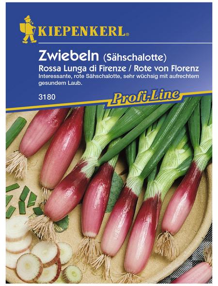 KIEPENKERL Lauchzwiebel cepa Allium