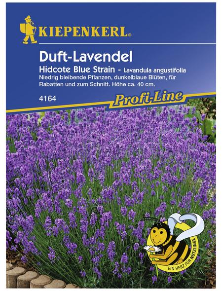 KIEPENKERL Lavendel, Lavandula angustifolia, Samen, Blüte: helllila