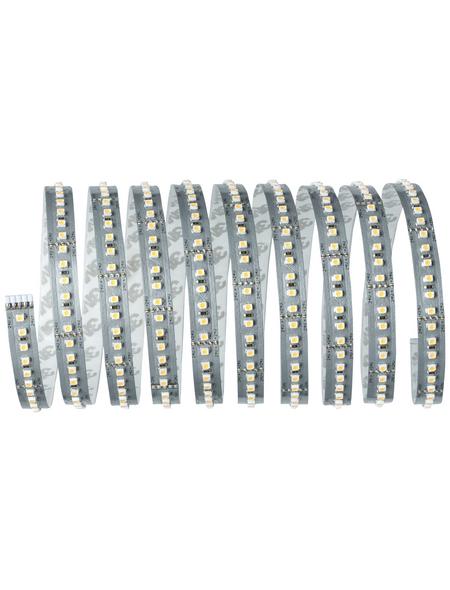 PAULMANN LED-Streifen »MaxLED 1000«, Länge: 300 cm, 3300 lm