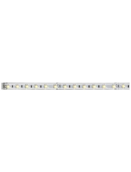 PAULMANN LED-Stripe 550 lm