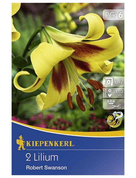 KIEPENKERL Lilie x Hybrida Lilium