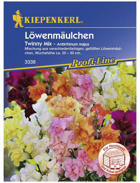 KIEPENKERL Löwenmäulchen, Agropyron repens, Samen, Blüte: mehrfarbig