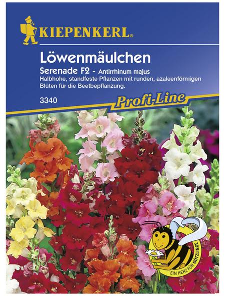 KIEPENKERL Löwenmäulchen, Antirrhinum majus, Samen, Blüte: mehrfarbig