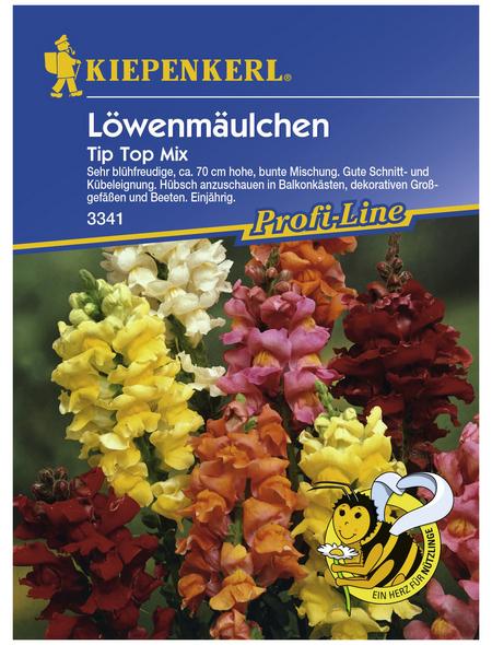 KIEPENKERL Löwenmäulchen, Valerianella locusta, Samen, Blüte: mehrfarbig
