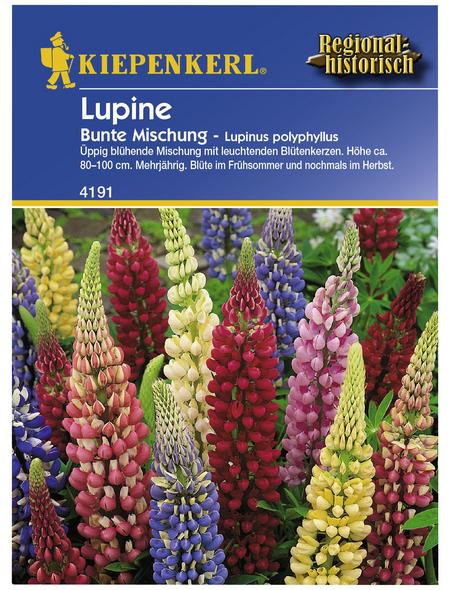 KIEPENKERL Lupine, Lupinus polyphyllus, Samen, Blüte: mehrfarbig