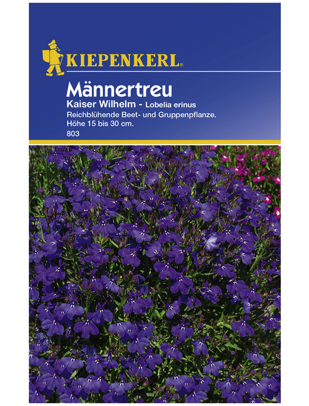 KIEPENKERL Männertreu, Lobelia erinus, Samen, Blüte: blau
