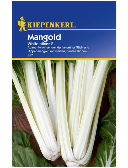 KIEPENKERL Mangold Beta vulgaris var. vulgaris »White Silver 2«