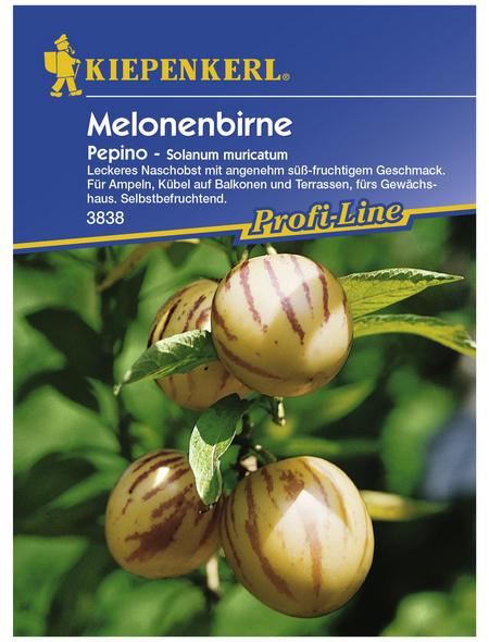 KIEPENKERL Melonenbirne, Salvia splendens, Samen, Blüte: mehrfarbig