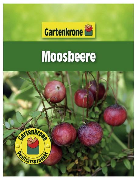 GARTENKRONE Moosbeere Vaccinium macrocarpon