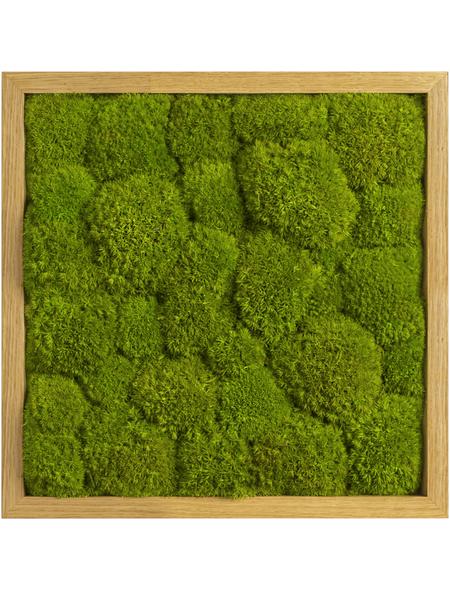Moosbild Eichenrahmen Ballenmoos Apfelgrün , BxHxT: 35 x 35 x 6  cm