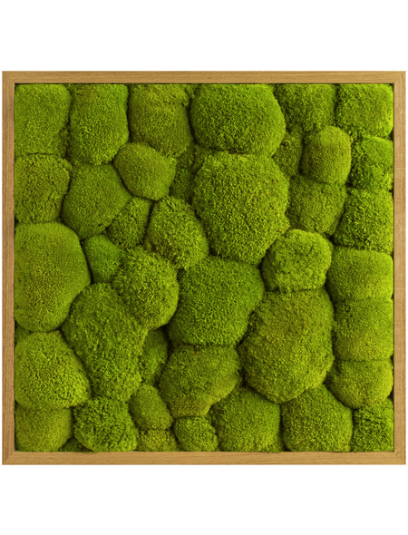 Moosbild Eichenrahmen Ballenmoos Apfelgrün, BxHxT: 55 x 55 x 6  cm