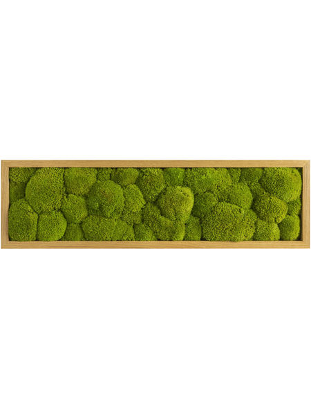 Moosbild Eichenrahmen Ballenmoos Apfelgrün, BxHxT: 70 x 20 x 6  cm