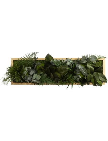 Moosbild Eichenrahmen, BxHxT: 20 x 70 x 8 cm, grün
