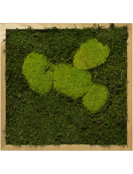 Moosbild Eichenrahmen, BxHxT: 35 x 35 x 6 cm, grün