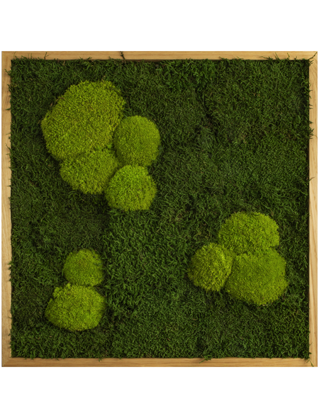 Moosbild Eichenrahmen, BxHxT: 55 x 55 x 6 cm, grün