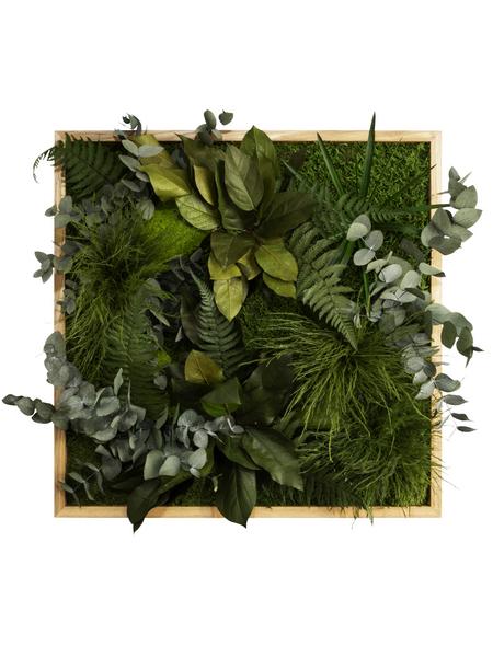 Moosbild Eichenrahmen, BxHxT: 55 x 55 x 8 cm, grün