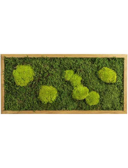 Moosbild Eichenrahmen, BxHxT: 57 x 27 x 6 cm, grün