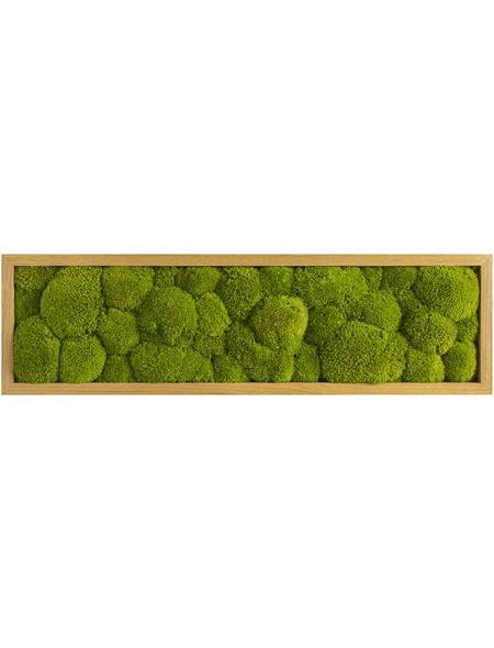 Moosbild Eichenrahmen, BxHxT: 70 x 20 x 6 cm, grün