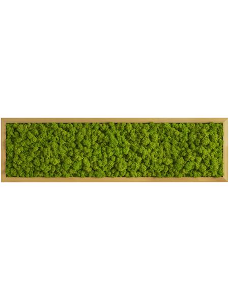 Moosbild Eichenrahmen Islandmoos Apfelgrün, BxHxT: 20 x 70 x 6  cm