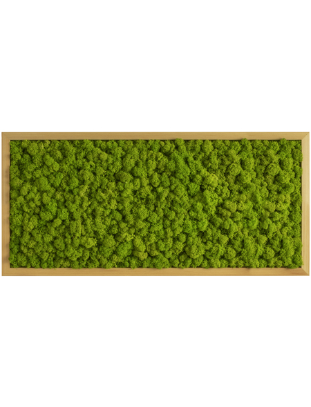 Moosbild Eichenrahmen Islandmoos Apfelgrün, BxHxT: 57 x 27 x 6  cm