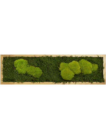 Moosbild Eichenrahmen Wald- und Ballenmoos, BxHxT: 20 x 70 x 6 cm