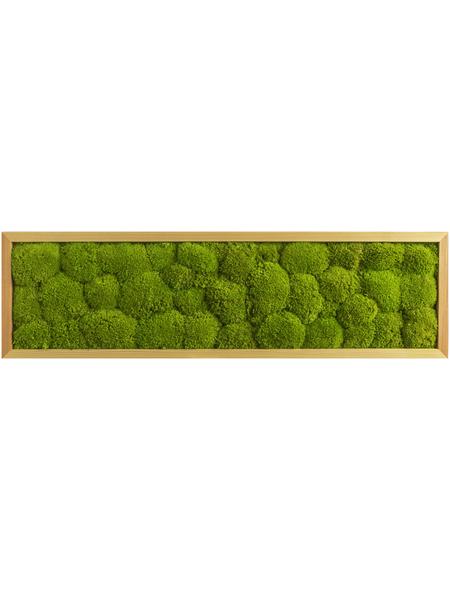 Moosbild Lärchenrahmen, BxHxT: 20 x 70 x 6 cm, grün